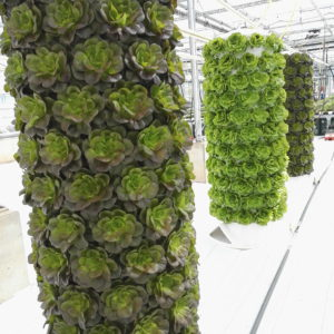 This image basically sums up what we already knew when we started and now you can see it too: Vertical farming is also beautiful!