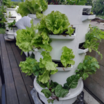 Vertical Growing / 3D-NFT
