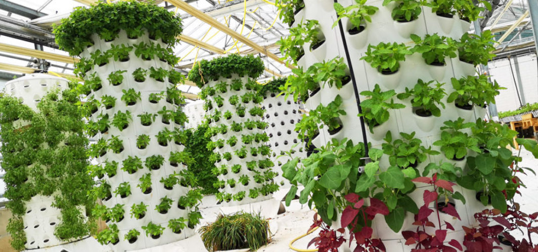 Aponix Vertical Barrel Featured in HortiDaily Article
