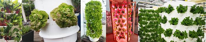 1-aponix-urban-farming